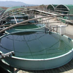 Tanks for Aquaculture